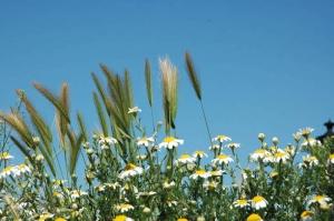 Outros/Flores - mistura de primavera
