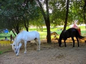 /Três lindos cavalos...