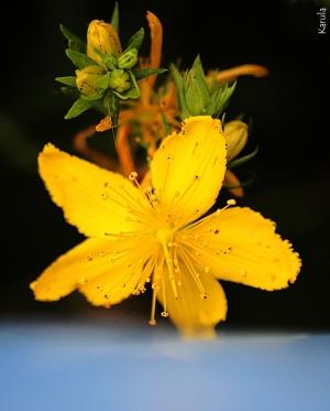 Outros/Mergulho floral...