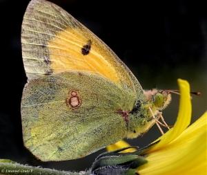 Macro/Até que enfim... uma borboleta!
