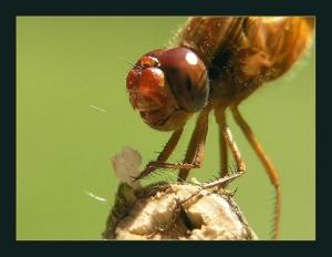 Macro/Insectos que vivem perto de nós.......
