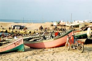 Outros/Venda de algas vermelhas Marrocos