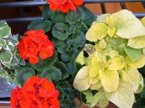 Macro/Vermelho e amarelo