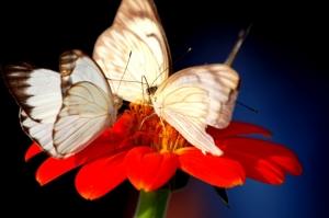 Outros/Nectar