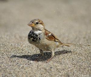 Animais/Chuva de areia...