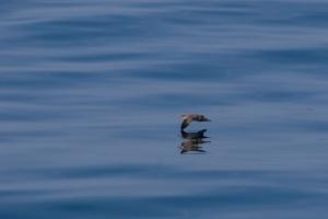 Outros/Riscando o mar