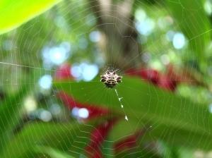 Outros/Spider