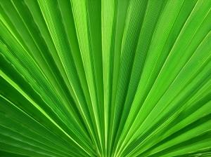 Outros/Verde Palmeira