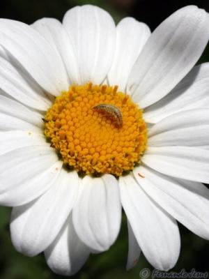 Macro/A vida num mar de polen