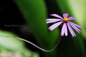 /Simplemente flor...