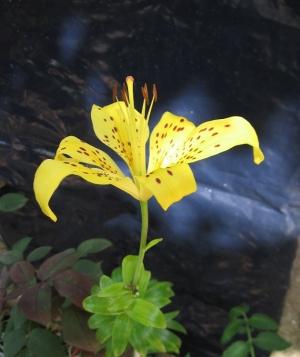 Macro/Orquídea real