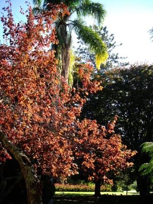 Outros/Cores de Outono