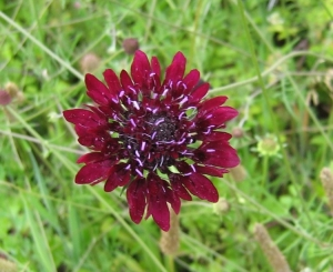 Macro/flor é beleza