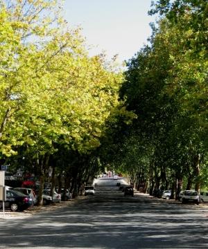 Gentes e Locais/Avenida