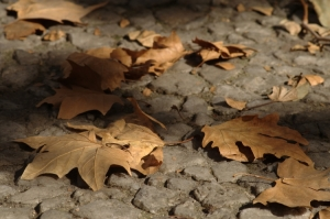 Paisagem Urbana/Bokeh de Outono