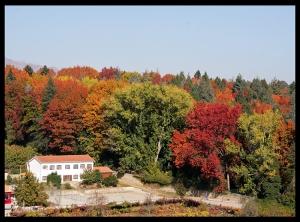 Paisagem Natural/Cores de Outono