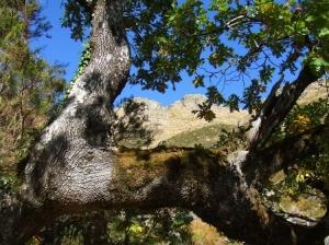 Paisagem Natural/A caminho do topo