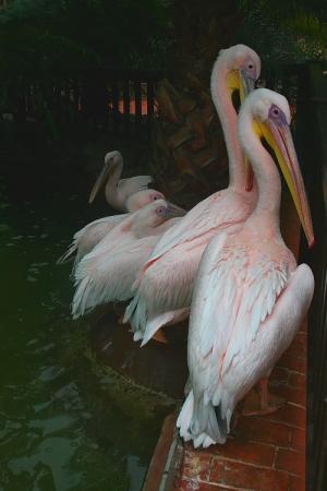 Animais/Elegância