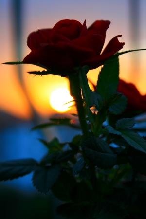 Paisagem Natural/Sun and Roses