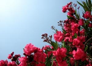 Paisagem Natural/Floreira e sol