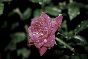 Macro/Rain drops 1