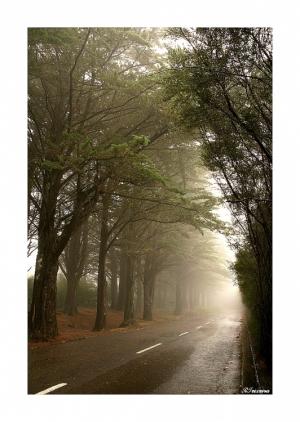 Paisagem Natural/Na neblina...