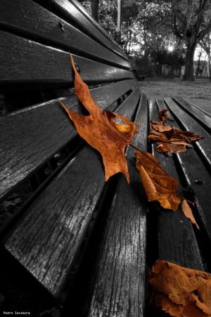 Arte Digital/Este Outono