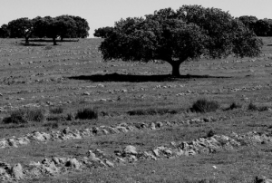 /Solitude standing II