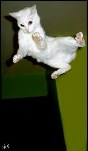 /Base Jump