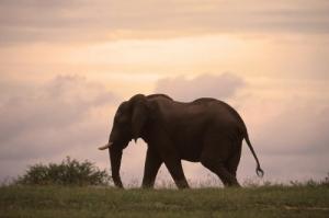 Animais/Elefante-África do Sul