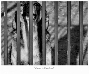 /Where is freedom?
