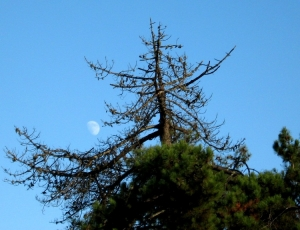 Paisagem Natural/Lua de dia