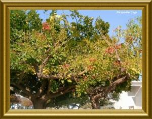 Paisagem Natural/a Natureza  enquadrada...