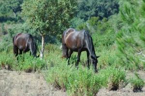 Outros/Cavalos