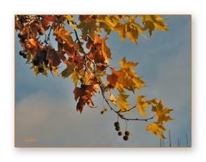Outros/Afinal ainda é Outono...