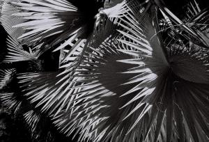Abstrato/Deflagração
