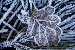 Macro/O inverno está a chegar