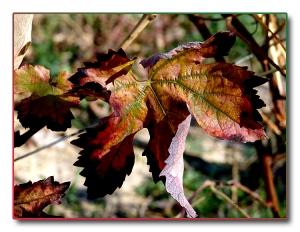 Outros/Até pro ano Outono!