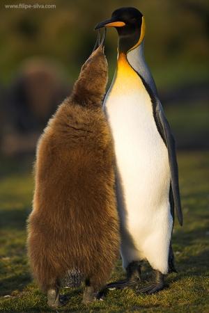 /Pinguinm Life 1