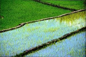 Abstrato/Verde Água