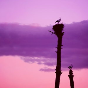Animais/2 Trees and 4 Storks