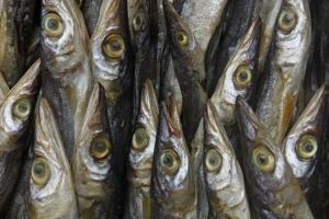 Outros/Mercado dos peixes de Padang
