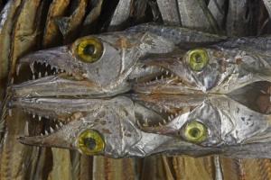 Outros/Mercado de peixes de Padang