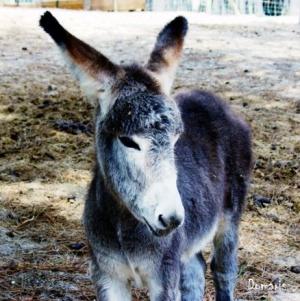 /Donkey