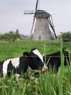 /Moinhos em Kinderdijk