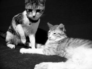 /Pipo e Mimi