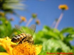 /Uma abelhinha só não faz verão...