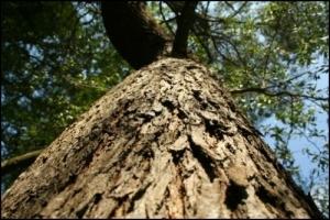 /0022-tronco em prespectiva