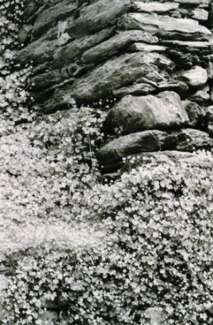 /As pedras e as flores