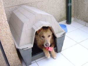 /Vida de cão